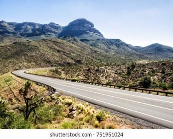 Tree Cactus by the road to Grand Canyon West Rim - Arizona, AZ, USA