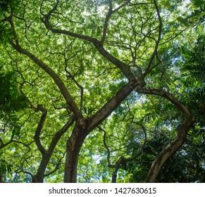 Tree Canopy Over Kauai Garden