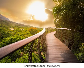 Tree Canopy Walkway (wooden bridge) in Kirstenbosch National Botanical Garden is acclaimed as one of the great botanic gardens of the world with gold light sky background, Cape Town, South Africa