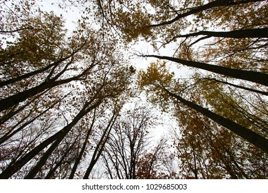 Tree canopy in the woods in Autumn season.