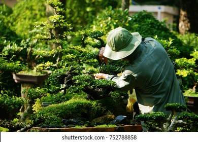 Tree care worker work on day at park of Ho Chi Minh city, Viet Nam, Asian man cutting bonsai tree