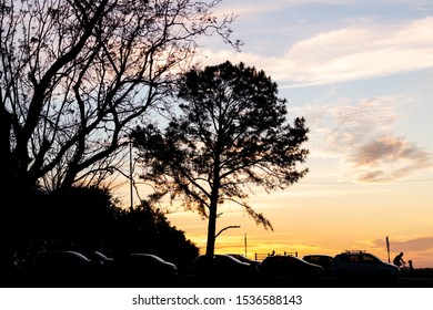 Tree and cars silhouette during sunset at Marinha do Brasil Park in Porto Alegre, Brasil