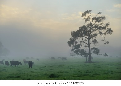 tree and cattle in foggy paddock