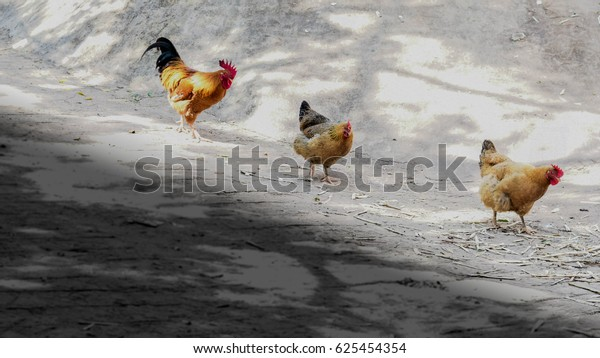 Tree Chicken Love Story One Man Stock Photo Edit Now 625454354