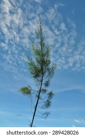 Tree with clear sky