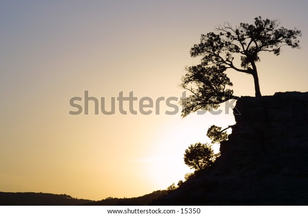 Tree and Cliff silhouetted by the sunset, in Austin Texas.