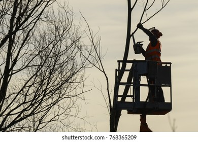 Tree climber with saw and harness, lumberjack at work in germany