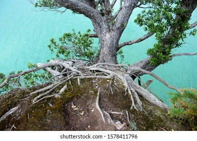 A tree clings to the soil at the top of a cliff, its roots exposed by erosion and weather.
