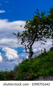 Tree And Clouds Background