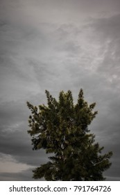 tree cloudy sky background