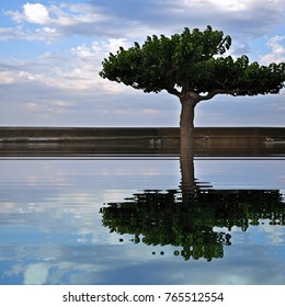 Tree and cloudy sky reflective water reflection square abstract image