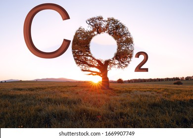 Tree as the CO2 icon. Background free with the sun. Nature Protect. Reducing CO2. The protection of the environment.