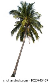 Tree coconut on white background, with clipping path.