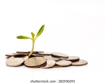 tree with coin money isolated on white background