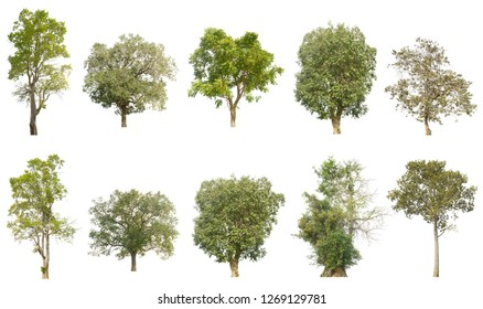 Tree collection on a white background