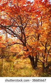 tree with color autumn foliage