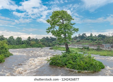 Tree in Congo river in Brazzaville, Congo Republic. Travel to Brazzaville in West-Africa on the Congo river.
