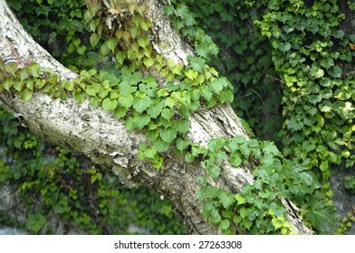 tree cortex with leaves