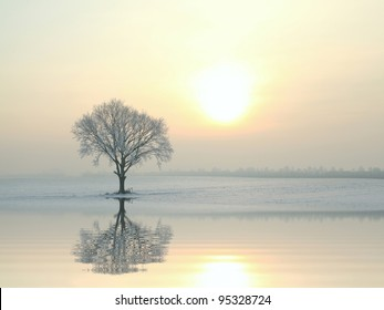 A tree covered in frost standing alone on the field.