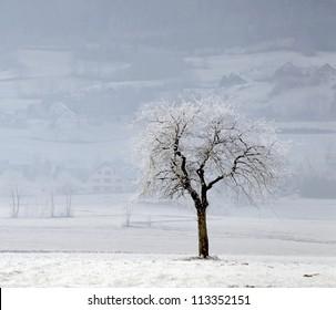 A tree covered with hoar-frost near Villard de Lanc - France