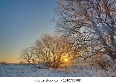 The tree is covered with hoarfrost in the winter. Photographed at sunrise on the background of a cloudless sky.