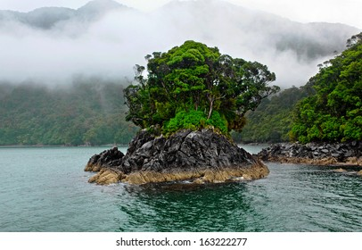 tree covered island on milford sound