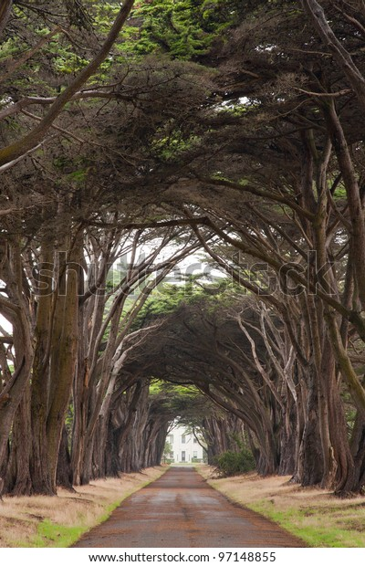 Tree covered lane leading to mansion
