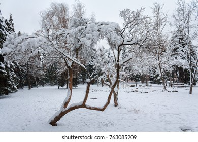 Tree covered with snow in a city park. Winter