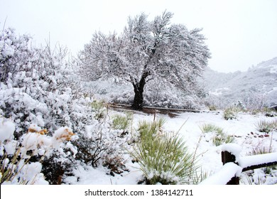 Tree covered in snow, Garden of the Gods, Colorado