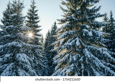 A tree covered in snow. High quality photo
