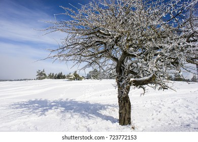 tree covered with snow and hoarfrost in the mountains a sunny day