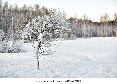 Tree covered with snow in winter park