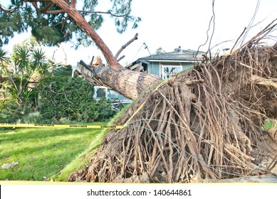 Tree crashes into home and exposes roots