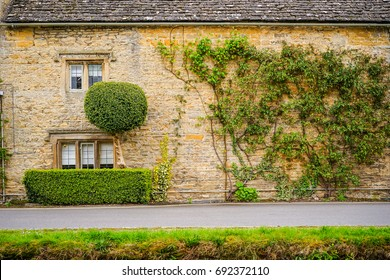 The Tree Creeping and Growing on The Wall of Stone House