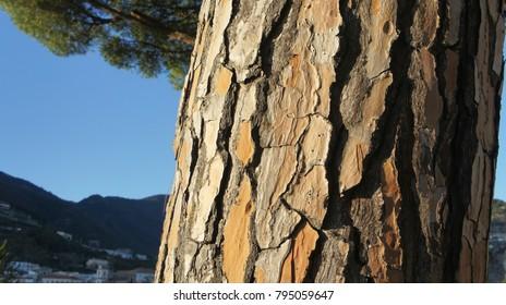 A tree in Croatia