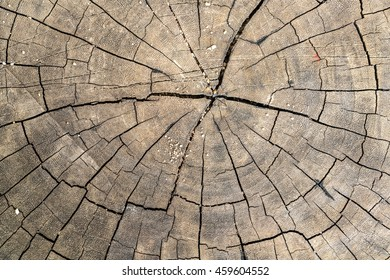 Tree cross section texture