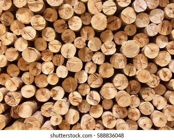 Tree cross section as wallpaper