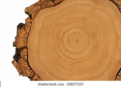 Tree Cross-Section with Thick Bark