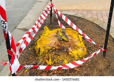 Tree cut trunk with danger white and red tape as safety concept