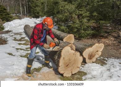 Tree cutting by a lumberjack