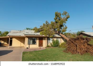 Tree damage after a major monsoon in Phoenix, AZ