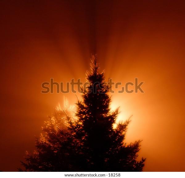 tree in dark