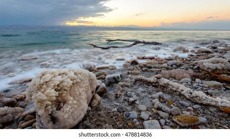 Tree in the Dead Sea