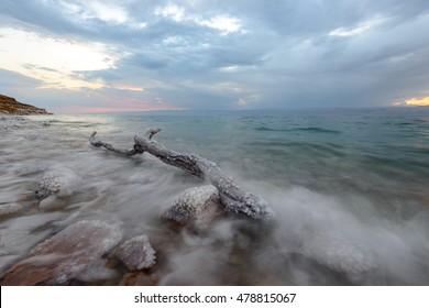 Tree in the Dead Sea 3