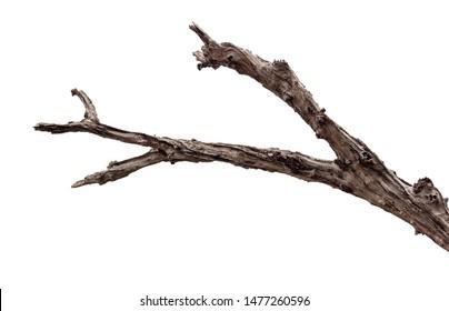 tree death or branch die on white background - Shutterstock ID 1477260596