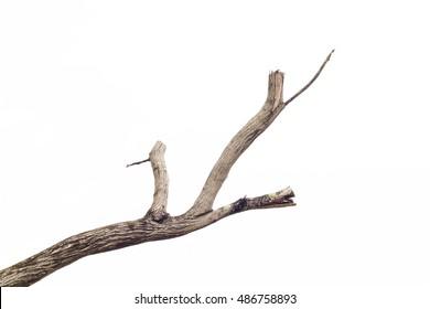 tree death or branch die on white background.