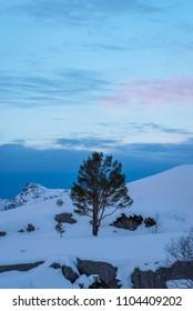 Tree in deep snow blue landscape