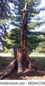 Tree destroyed by lightning strike during a thunderstorm