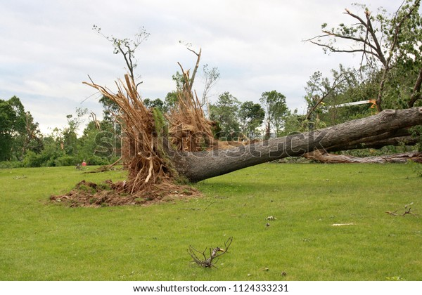 Tree Destroyed by wind
