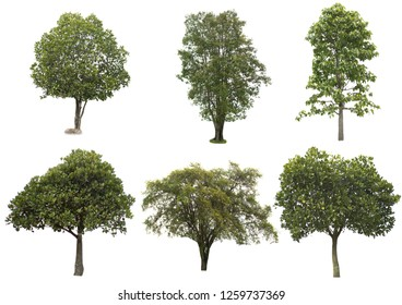 tree dicut at isolated on white background with clipping paths, Clipping inside